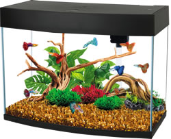 FRF-590BLA PANORAMIC TANK BLACK 60L